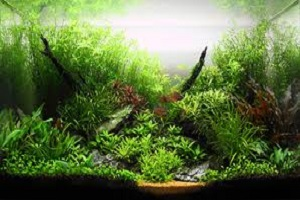 Aquatic Plants.jpg