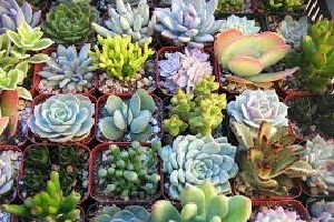 Cactus and Succulents.jpg