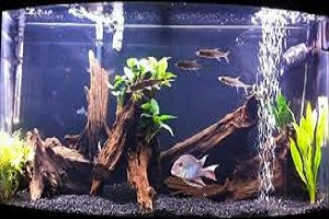 Drift Wood In Fish Tanks.jpg