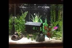 Fish Tank Ornaments.jpg