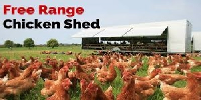 Free Range Chicken Shed.jpg