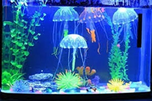 Jelly Fish In Fish Tank.jpg