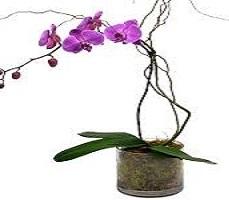 Orchids Wine