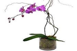 Orchids Wine.jpg