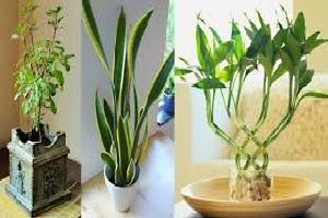 Vastu plants.jpg